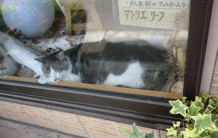 2014-6-9うちの猫たち③