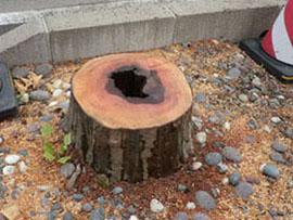 2014-6-14街路樹伐採供養②