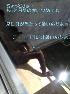 写真 3[1]