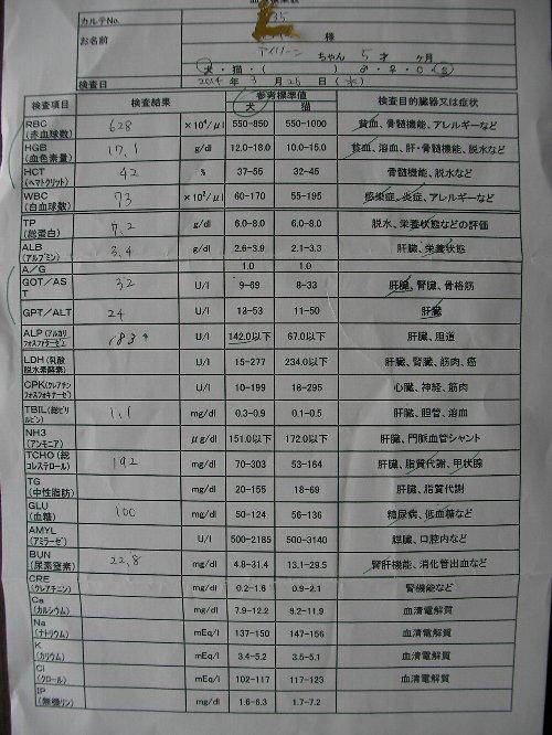 3月26日油大量接種後血液検査