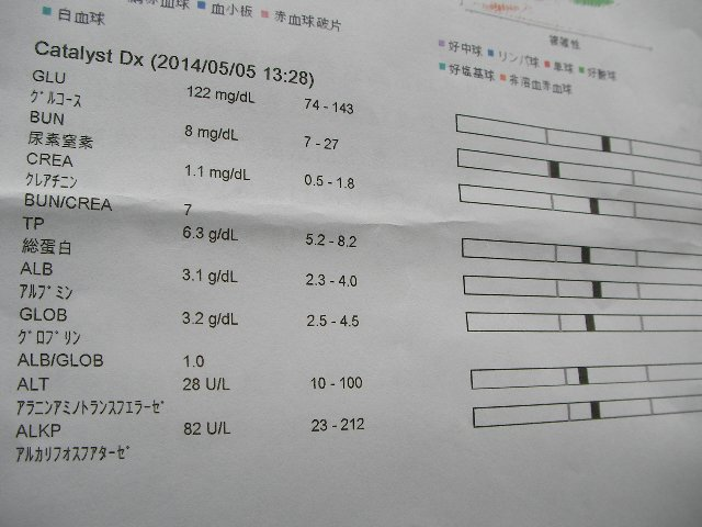 ペットドック検査結果⑤