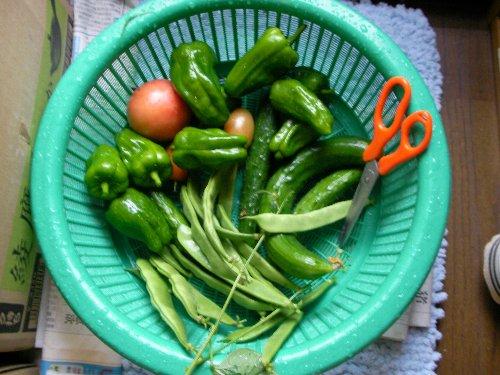20140703収穫野菜①