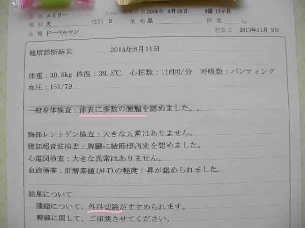 20140811エミリドック結果④-1①