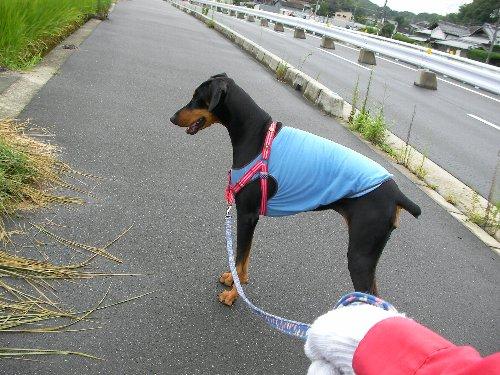 201408281056雨上がり散歩③