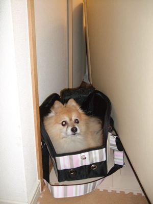 まだバッグの中