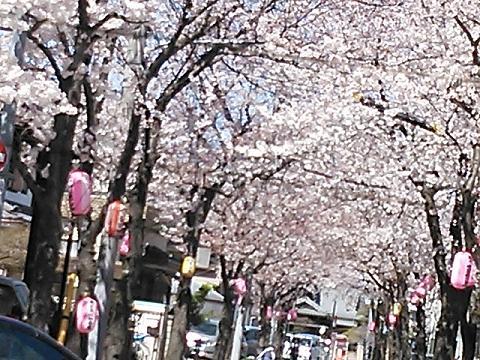 桜2014 014