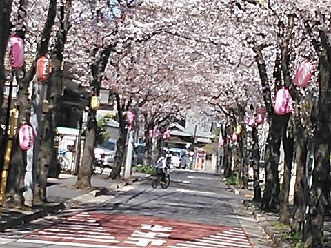 桜2014 015
