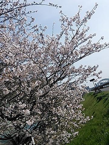 2014桜&つくし 021