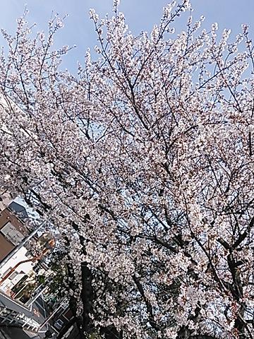 2014桜&つくし 022