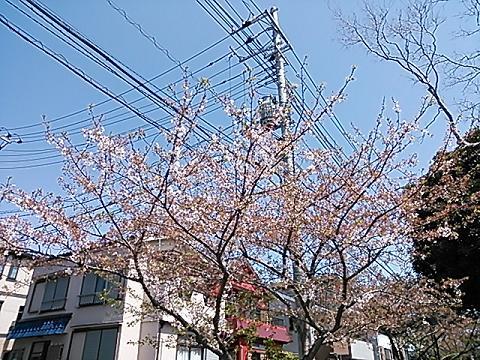 緑の桜 008