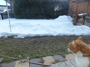 雪はこのくらい