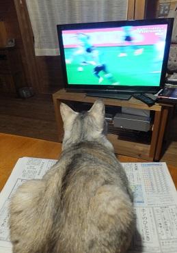 サッカー好きにゃ