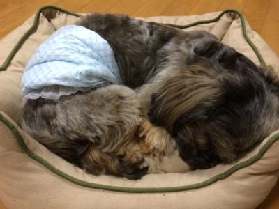 太郎のベッド