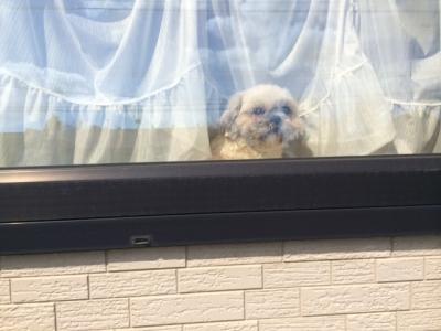 もんち出窓で3