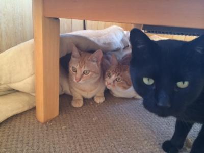 タッキーとチョロとタマ