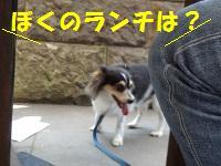 DSC00084ass.jpg