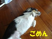 DSC01588a.jpg