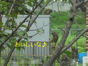 DSC01662a.jpg