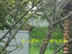 DSC01665a.jpg