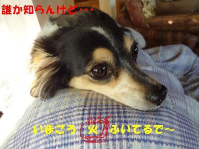 DSC01926a.jpg