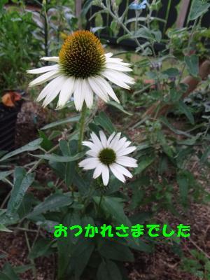 DSC01980a.jpg