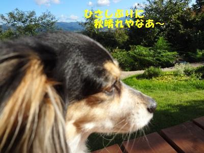 DSC02340a.jpg