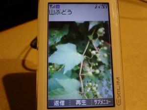DSC02505a.jpg