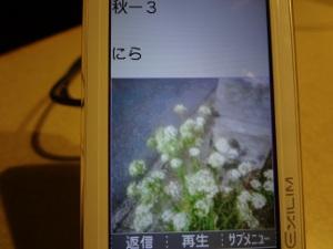 DSC02507a.jpg