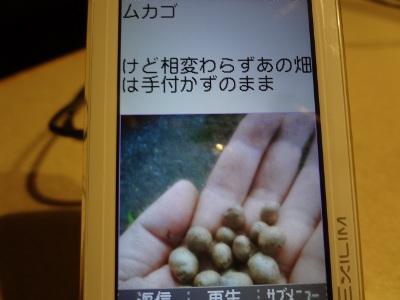 DSC02508a.jpg