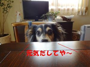 DSC08974a.jpg