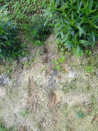 崖下から続く足跡