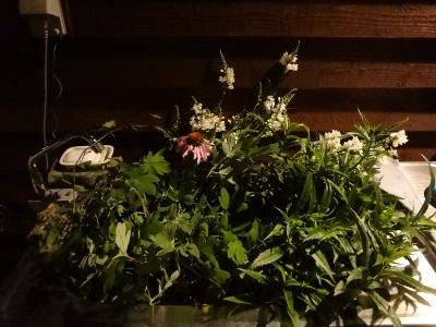 折れた花々
