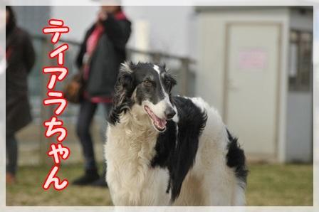 ティアラちゃん紹介