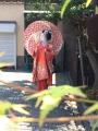彩撮影舞妓
