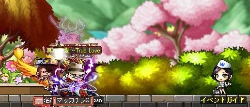 Maple11962a.jpg