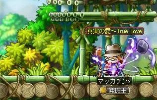 Maple12228a.jpg