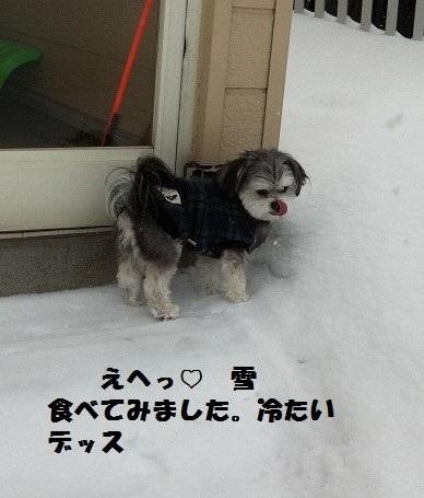 雪食べましたョ