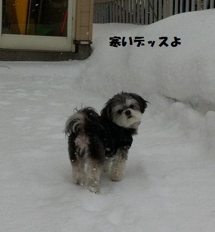雪の中のクー