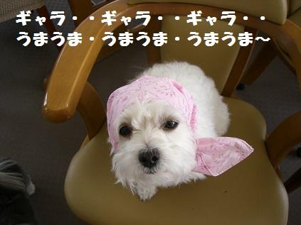 姫子ほっかむり