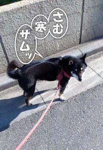 140307_samu.jpg