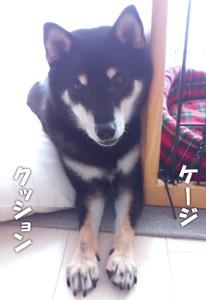 140528_sukima.jpg