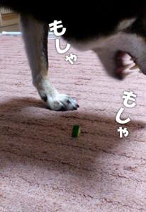 140605_kyuri2.jpg