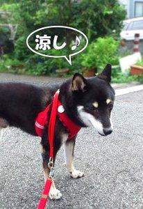 140813_suzushi.jpg