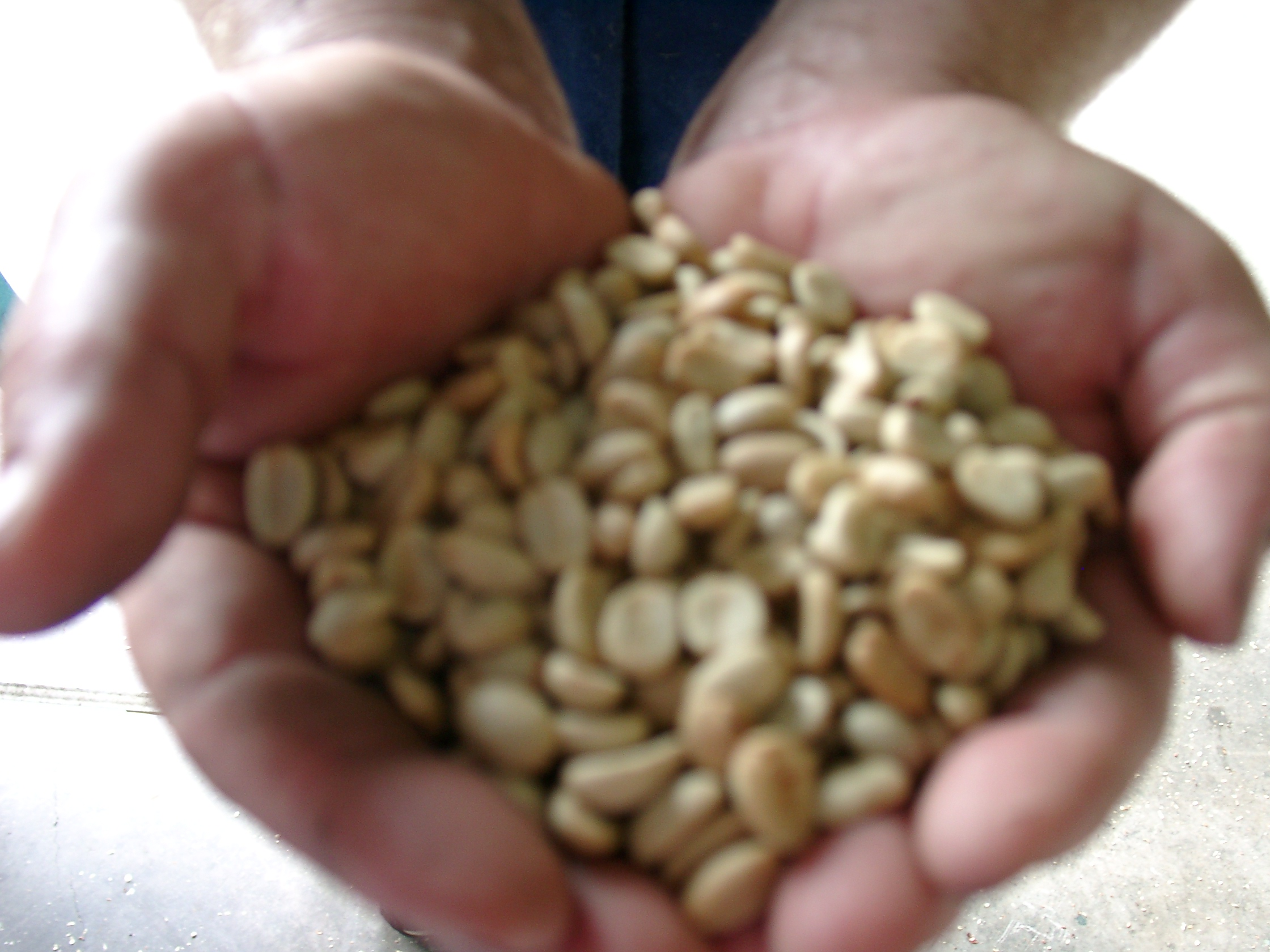 Koacoffeeplantation 050