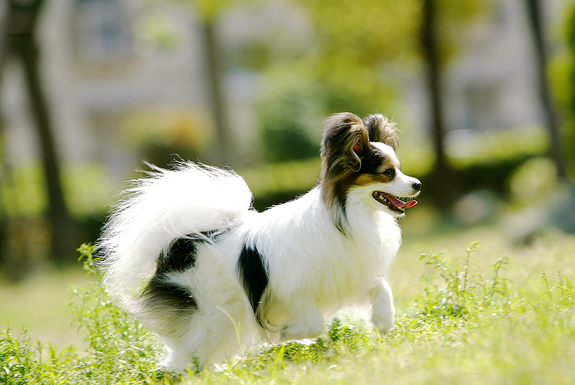 dog0025-018.jpg