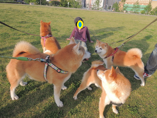 14050903.png