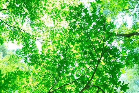 140703 木洩れ日