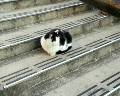 日暮里の猫