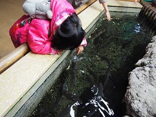 inokashira-zoo76.jpg