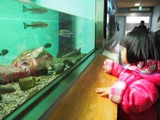 inokashira-zoo79.jpg